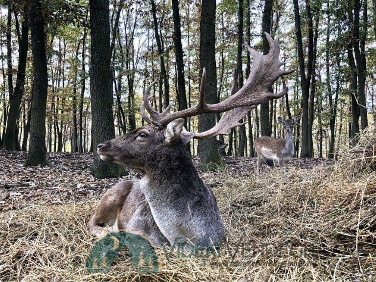 annafurdo-vendeghaz-az-ev-turistahaza-2020-lengyel-apponyi-grof-csodalatosmagyarorszag-aktivmagyarorszag-isten-vadaspar-szarvas.jpg